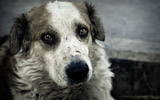 Most Inspiring Dog Rescues