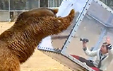 Grizzly Photo Cube