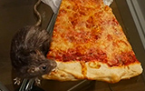 NYC Pizza Rat Prank