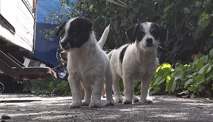 Hope For Paws - Saving Five Orphaned Puppies