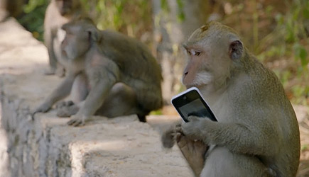 Why Monkeys Steal From Tourists