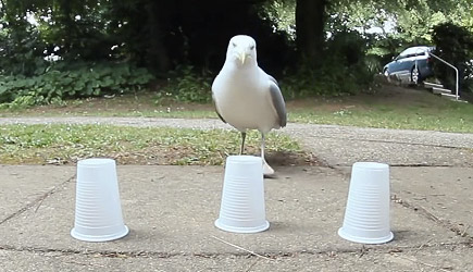 Three Cups One Seagull