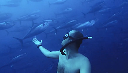 Divers vs Sea Of Tuna
