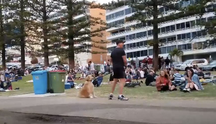 Dog Won't Leave The Park
