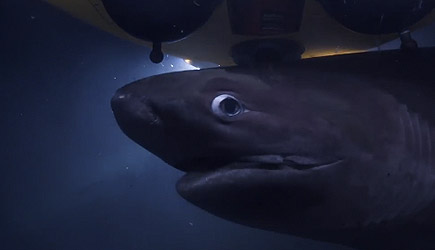 Blue Planet II - Sharks Attack Submarine