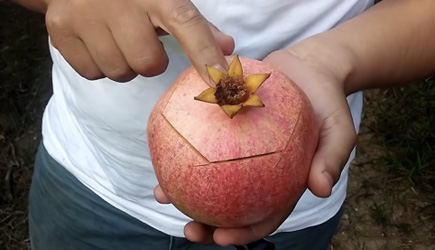 This Is How You Cut A Pomgranate