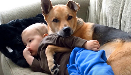 Best Friends - Babies & Dogs