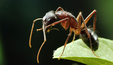 True Facts: Ant Mutualism